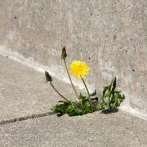 Zdrowy beton?